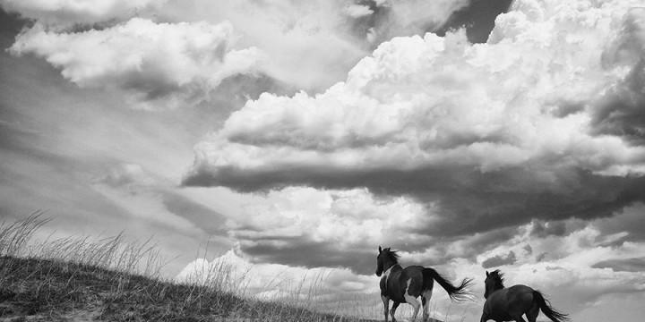 Brett Erickson, Horses and Gathering Storm, photograph