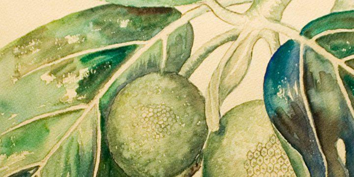 Anna Fay Albin, Bread Fruit, Pencil, water, 1948