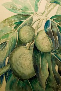 Anna Fay Albin, Bread Fruit, Pencil, watercolor, 1948