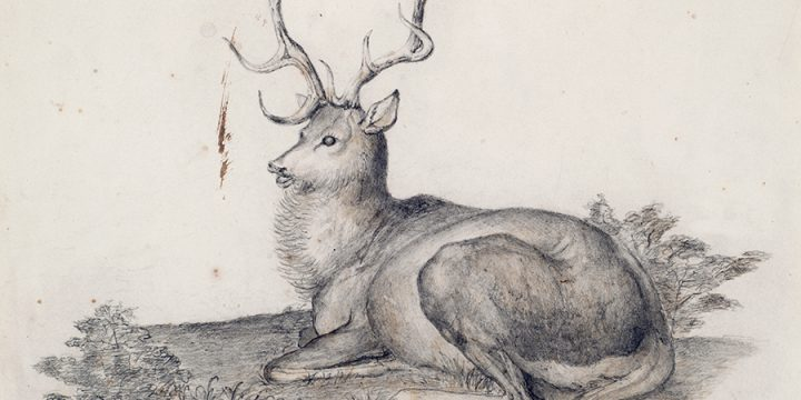 Titian Ramsay Peale, Stag Resting in a Landscape, pencil, 1820