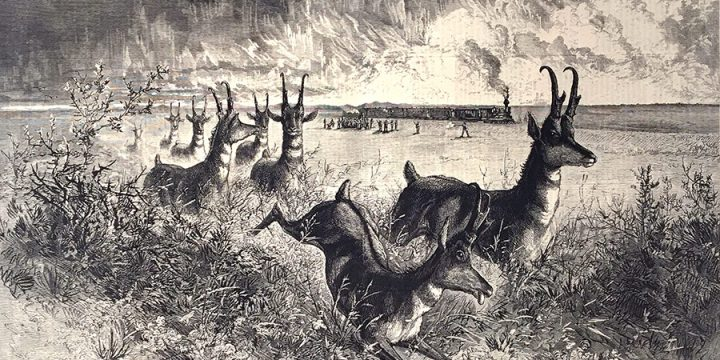 Jules Tavernier, Shooting Antelopes from a Railroad Train in Colorado, wood engraving, published in Harper's Weekly, May 29, 1875