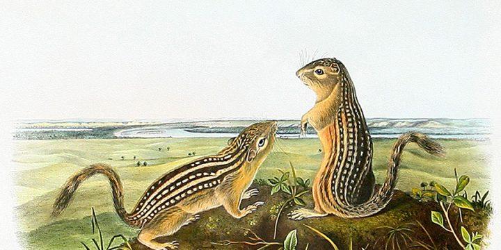The Legacy of Audubon