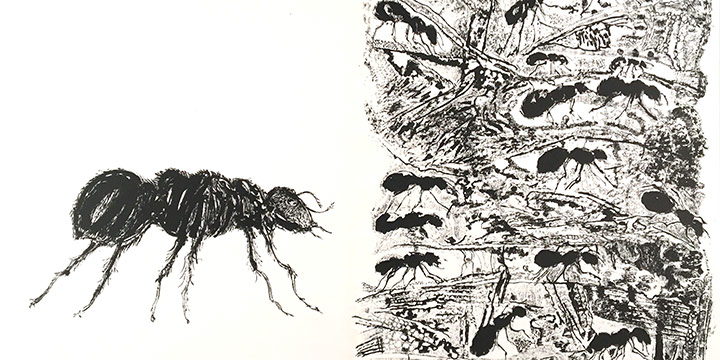 Rudy Pozzatti, The Ant from Bishop Theobald's Bestiary, lithograph, 1964