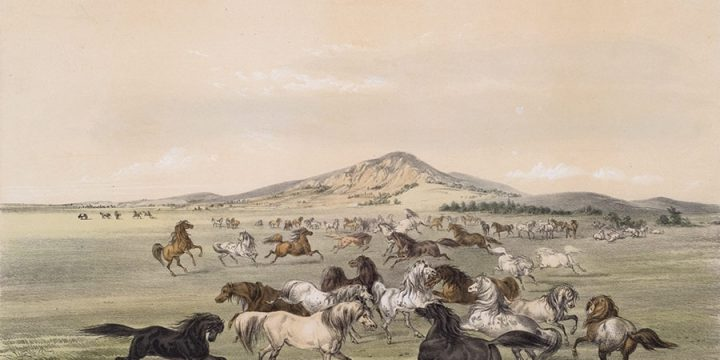George Catlin, Catlin's North American Indian Portfolio, Wild Horses At Play, lithograph, c. 1844