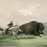 George Catlin, Catlin's North American Indian Portfolio, Buffalo Hunt, Chase - No. 5, lithograph, c. 1844