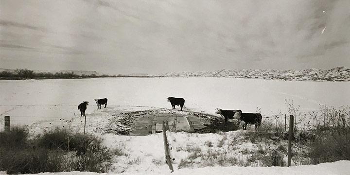 Larry S. Ferguson, #15-55-10 Cattle Power Circle, black & white photograph, 1978