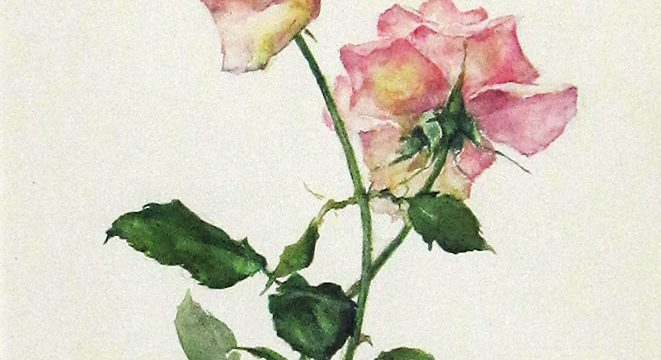 Eulabee Dix, Two Pink Roses, watercolor, n.d.