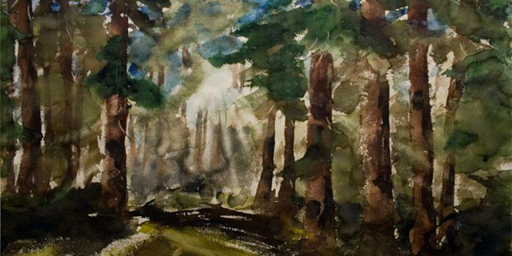 David Godbey, Sunlit Redwoods, watercolor, n.d.