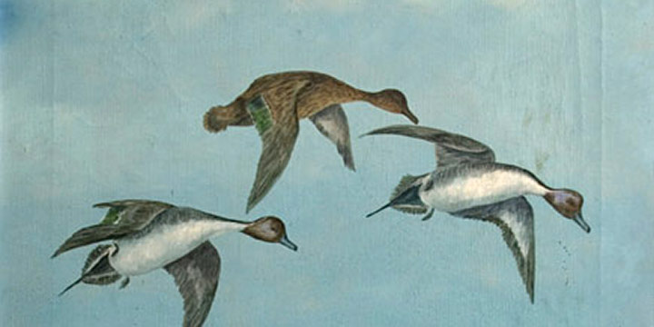 Miles Maryott, Untitled (pintails in flight), oil on canvas, 1920