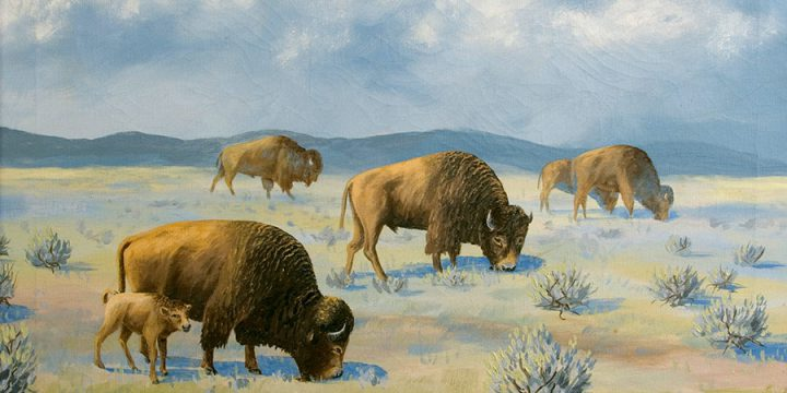Miles Maryott, Grazing Buffalo, oil on canvas, 1934
