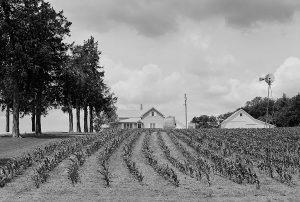 Charles W. Guildner, Matthies Farm, black & white photograph, 1995