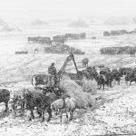 Charles W. Guildner, Lives of Tradition Vol. II, Scenes - Blizzard Feeding, silver print (5/20) 2004