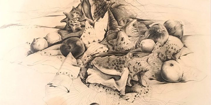 Keith Martin, Shells and Fruit, graphite on paper, 1947