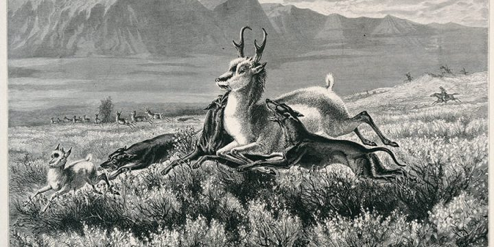William de la Montagne Cary, Antelope Hunting on the Plains, wood engraving, published in Aldine, Art Journal of America, 1874