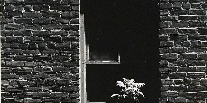 Peter Worth, Solitary Plant, black & white photograph, n.d.