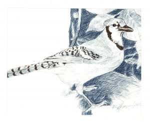 Robert Weaver, Blue Jay, ink, 1982