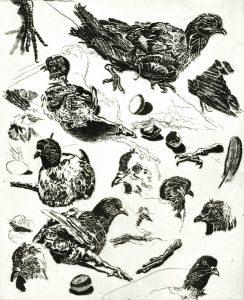 Robert Weaver, Study of a Crippled Pigeon, etching (artist's proof), 1971