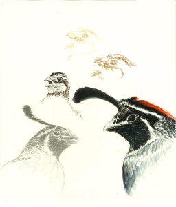 Robert Weaver, Untitled (study-5 bird heads), ink, pencil, watercolor, 1987