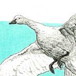 Robert Weaver, Untitled (goose), watercolor, ink, 1983