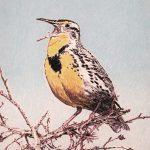Rober Weaver, Meadowlark