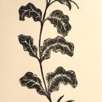 Leonard Thiessen, Untitled (flower stem), engraving, linoleum block (proof), n.d.