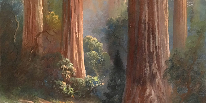 Carl Sammons, Untitled (redwood trees), pastel, n.d.