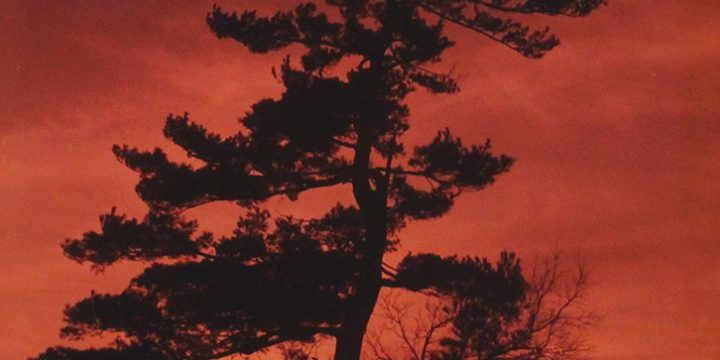 William Jamison, Pine at Sunset – Brownville, Nebraska, color photograph, 1985