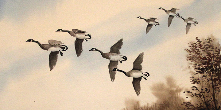 Jim McClelland, Canada Geese in Flight, watercolor, n.d.