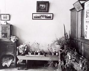 Wright Morris, Plants, Cahow's Barber Shop, Chapman, Nebraska, 1947