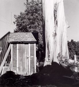 Wright Morris, Eucalyptus and Outhouse, Claremont, California, 1935
