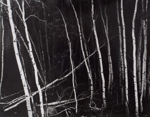Wright Morris, Aspen Grove, Colorado, c. 1943, silver print, 1975