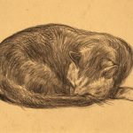 Grant Reynard, Untitled (resting cat), graphite, n.d.