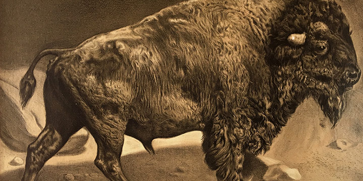 """Unknown Artist, The Oldest Inhabitant on line of Union Pacific, photogravure, 20 × 23¾"""""""