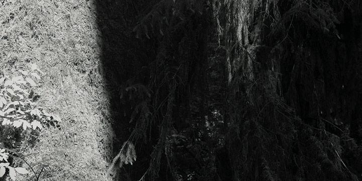 Derrick Burbul, Hoh Rainforest, Olympic National Park, Archival Ink Jet Print, 2004
